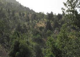 155 هزار هکتار از کل مساحت برخوار (218 هزارهکتار) منابع طبیعی است