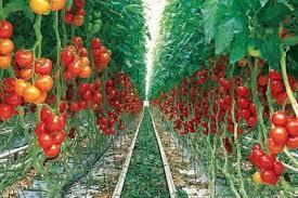 دلایلی که کشاورزان توانمند برخوار را راهی خوزستان کرد