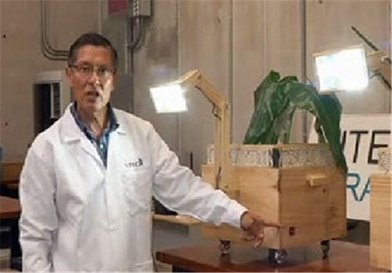 لامپ گیاهی اختراع شد /عکس