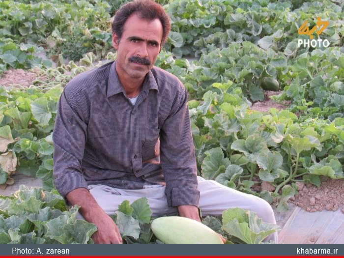 حمایت از خرید محصولات، حداقل انتظار ما از جهاد کشاورزی است +تصاویر