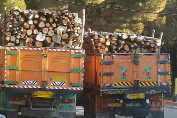 کشف ۴.۵ تن چوب قاچاق بلوط در شهرستان برخوار