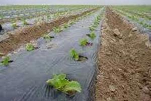 برخوار، یکی از بزرگ ترین تولید کنندگان محصو لات صیفی در استان