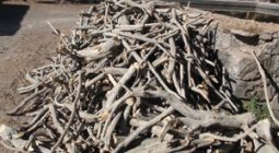 ۳۰۰ کیلوگرم چوب تاغ در برخوار کشف و ضبط شد