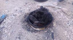 کشف حدود یک تن و ۳۰۰کیلوگرم ذغال و چوب تاغ در برخوار