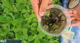 پرورش ماهی زینتی توسط جوان دولت آبادی +تصاویر