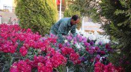 خرید ۸۰ میلیونی گل توسط شهرداری دولت آباد برای زیبایی شهر