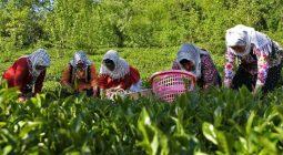 کار آفرینی در روستاها از مهاجرت جلوگیری میکند