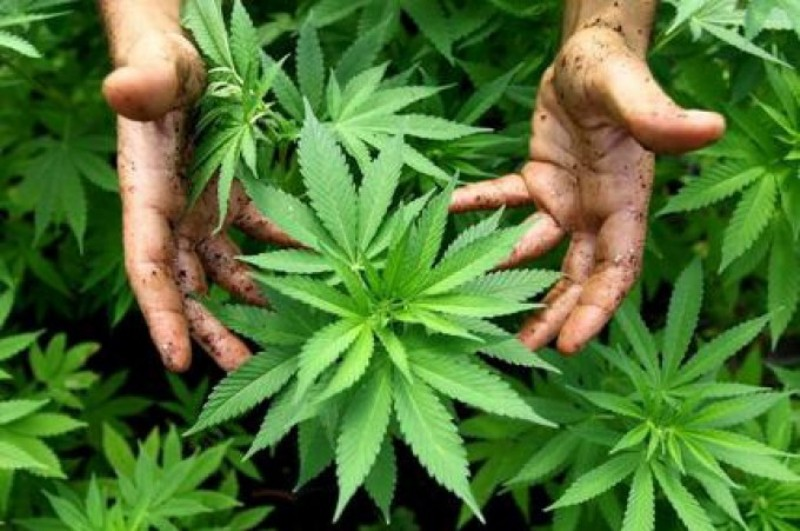 چگونه متوجه بشویم فرزندمان اعتیاد به گل یا ماریجوانا دارد