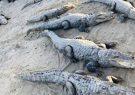 خطر حمله گاندوها به مردم سیل زده +فیلم